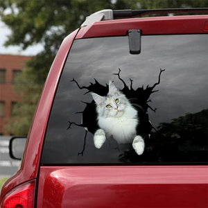 MAINE COON CRACK STICKER CATS LOVER 2