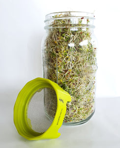 Sprouting Jar Lids