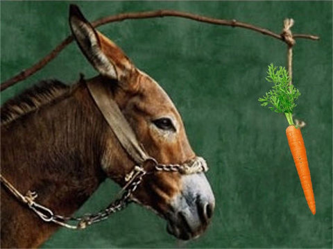 Carrot and Donkey