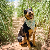 Alligator Reversible Pet Bandana