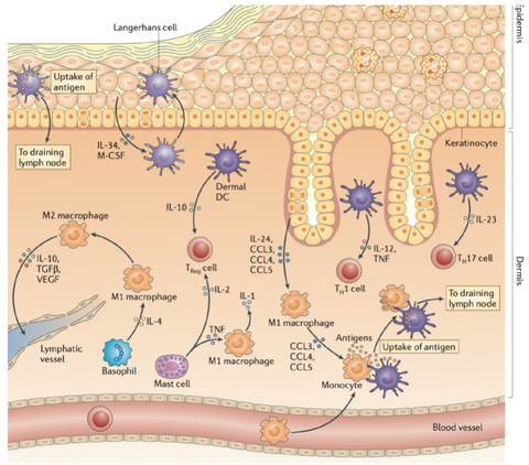 inflammation mechanism nature journal reference