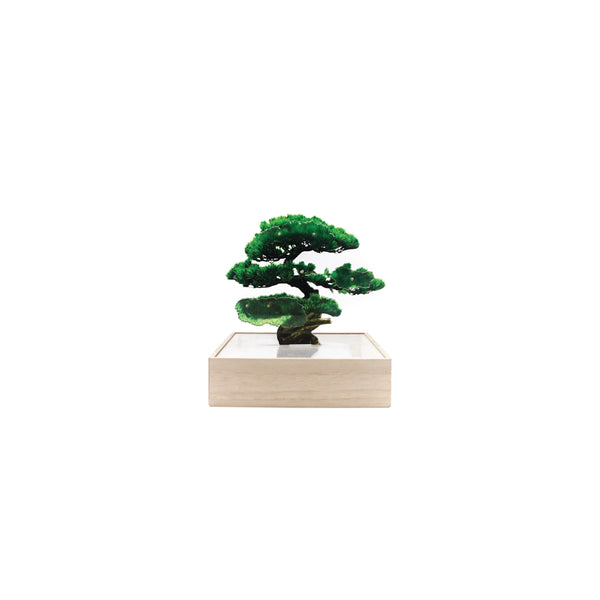 Toumei Mini Bonsai_Pine Tree Green - OKURA