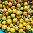 Tomatoes, Cherry Sungolds