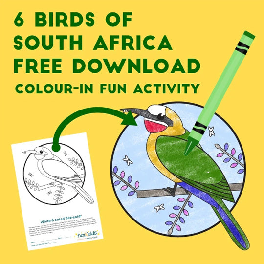 Birds of South Africa | Colour-in Activity