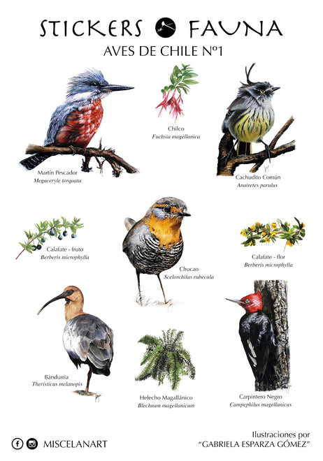 STICKERS DE AVES DE CHILE