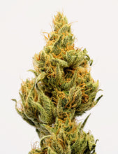 Load image into Gallery viewer, Original Haze 100% Columbian 5 Seeds