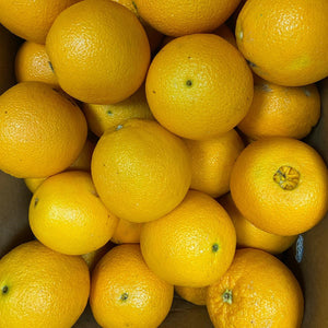 South Africa Navel Oranges x 6