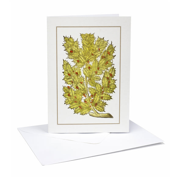 Christmas Cards Holly (Pack of 6)