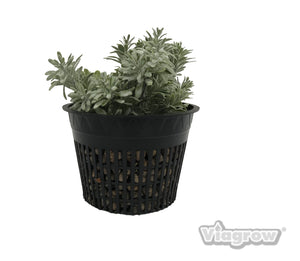 Viagrow Net Pot, 6 in. Case Quantity of 270