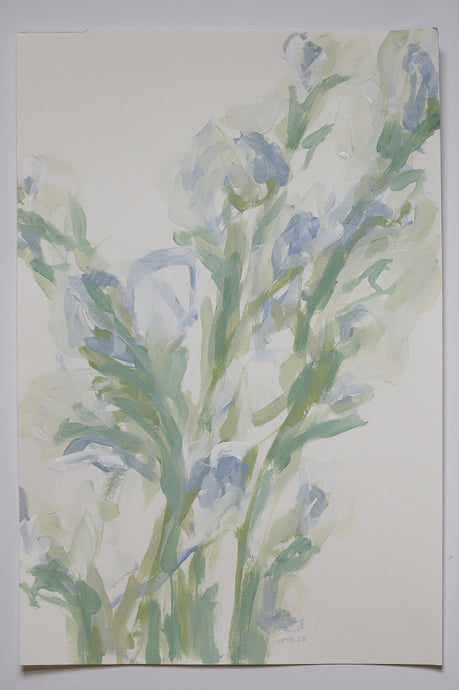 White Gladiolus, No. 1 - 12x18