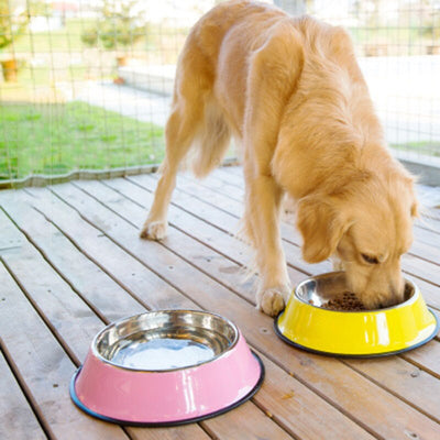 Large Stainless Steel Pet Dog Bowls Puppy Food Drink Water Feeder Pets Supplies Non-slip Feeding Dishes