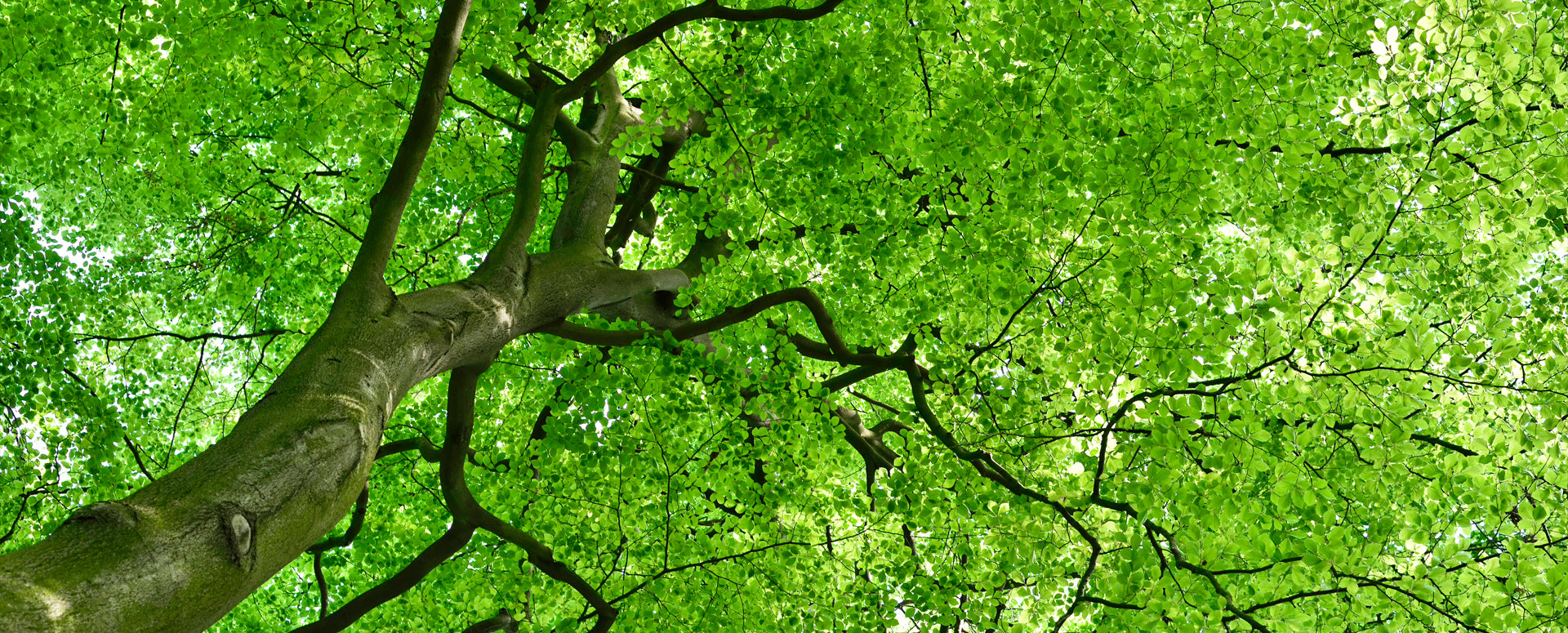 sustainability + ethics trees - natural products for eczema