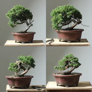 Shrinking a Juniper