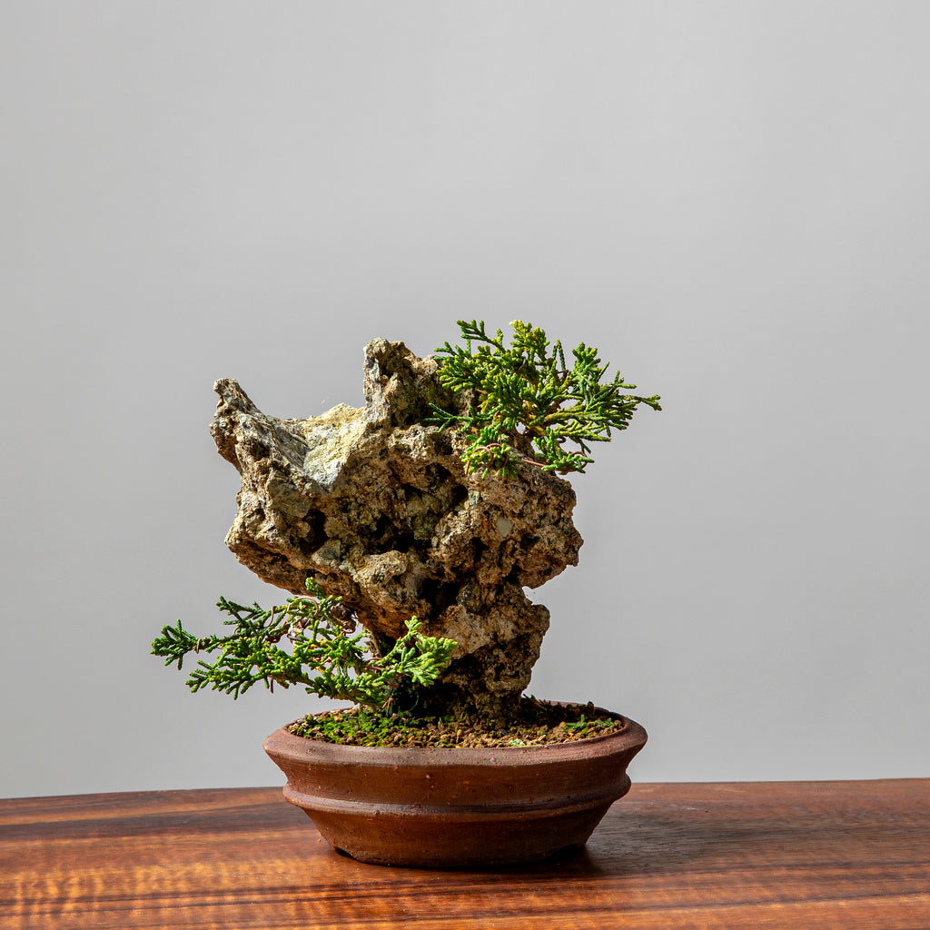 Creating Small Juniper Rock Plantings