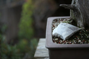 How to Mindfully Fertilize Bonsai Trees
