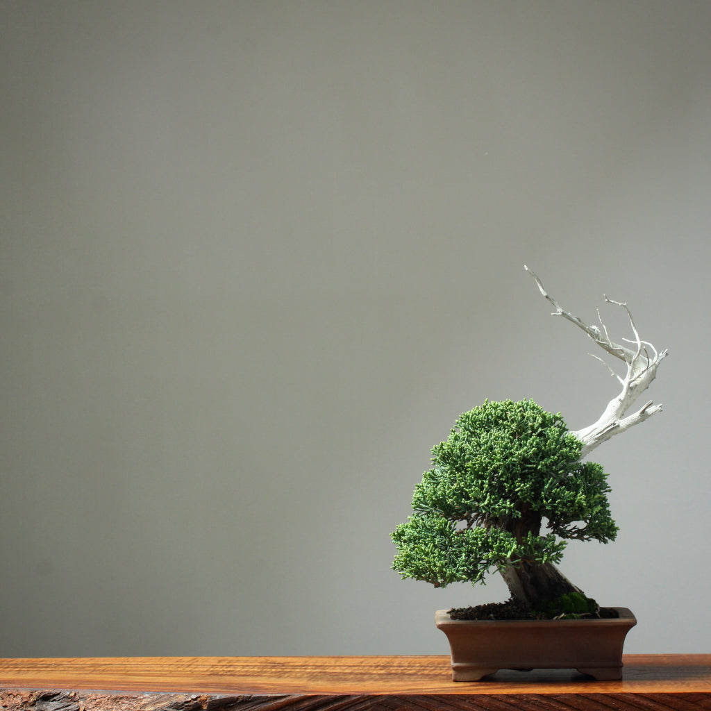 My Particular Brand of Bonsai Photography