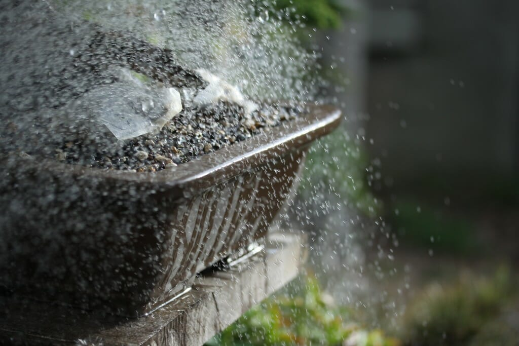 How to Mindfully Water Bonsai and Maintain Soil Moisture