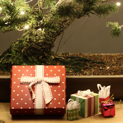 Photo of gifts with bonsai tree in background
