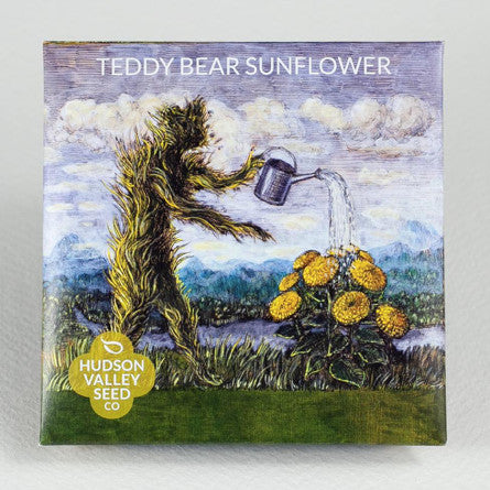 Teddy Bear Sunflower Seeds - Indie Indie Bang! Bang!
