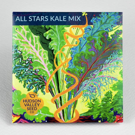 All Stars Kale Mix Seeds - Indie Indie Bang! Bang!