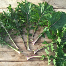 Load image into Gallery viewer, All Stars Kale Mix Seeds - Indie Indie Bang! Bang!