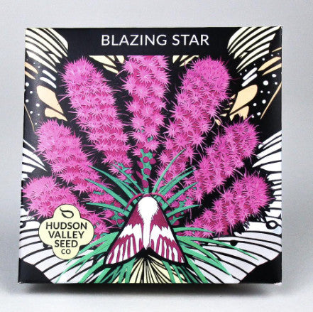Blazing Star Seeds - Indie Indie Bang! Bang!
