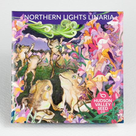 Northern Lights Linaria Seeds - Indie Indie Bang! Bang!