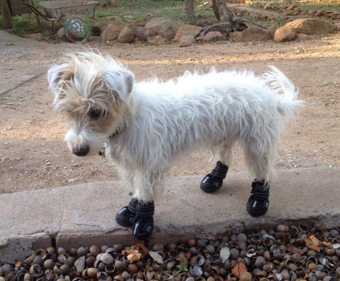 Walker Active dog boots (Trixie) - positive feedback