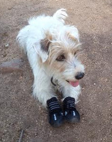 Dog boot South Africa