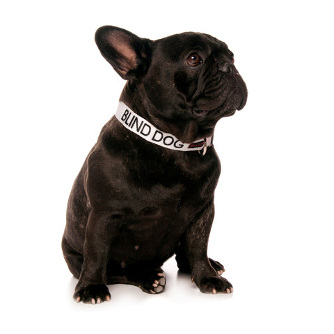 FRIENDLY - S/M CLIP COLLAR