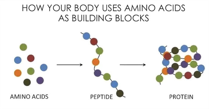 horse taking an equine amino acid supplement