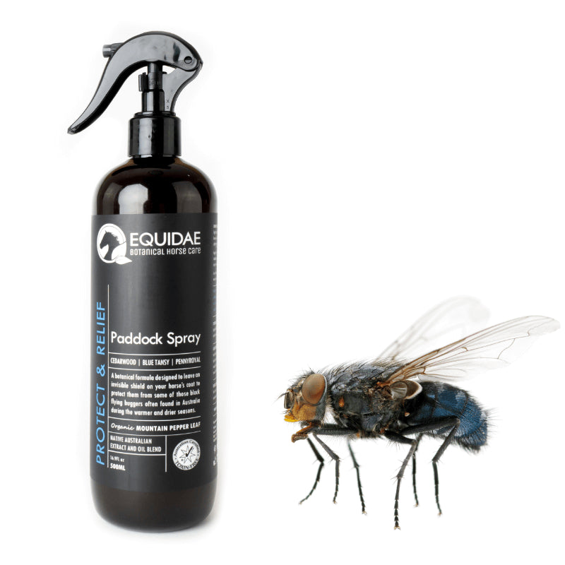 Rider spraying horse fly spray inside paddock to protect horses from horse flies