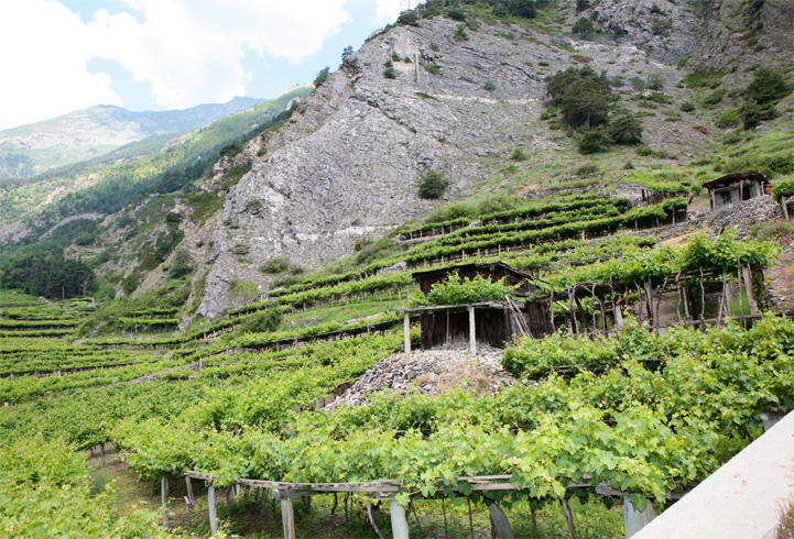 Vintage 2015 Progress Report – Valle d'Aosta