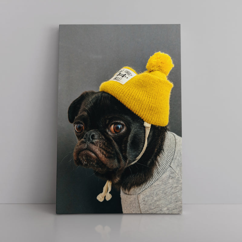 The Swaggy Pug