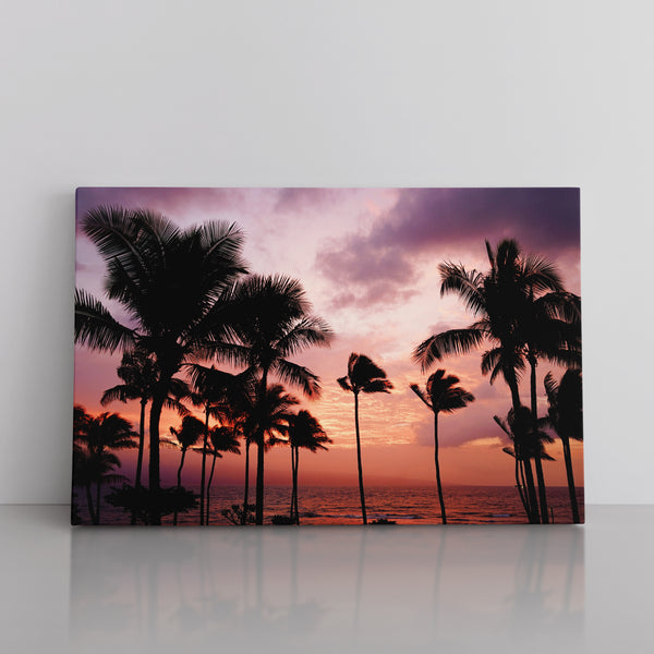 Palm Trees / Sunset