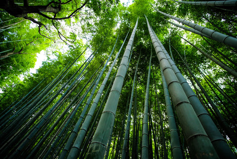 How Eco-Friendly are Bamboo products? bamboo are the fastest plant in the world