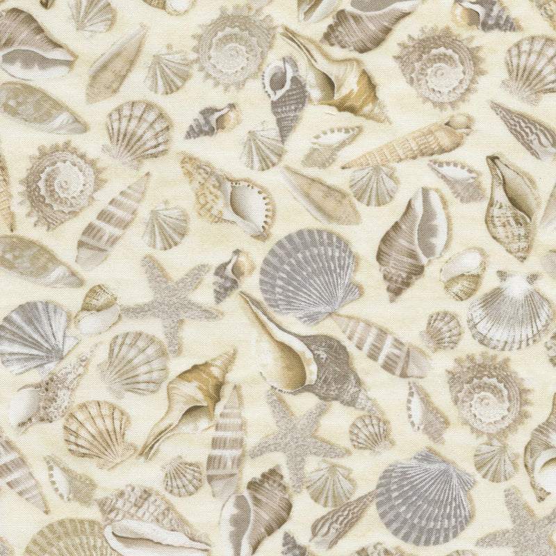 Beach Haven - Beach Shells