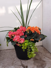 Load image into Gallery viewer, Begonia 13 Inch Planter