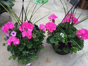 Mixed Hanging Baskets