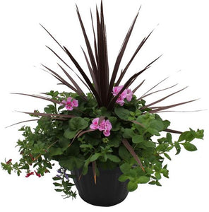 Mixed Patio Planter 16 inch  (Novelty Centre)