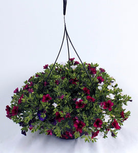 Calibrachoa (Million Bells) Hanging Basket (Available Mid May)