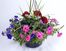 Load image into Gallery viewer, Mixed Hanging Baskets