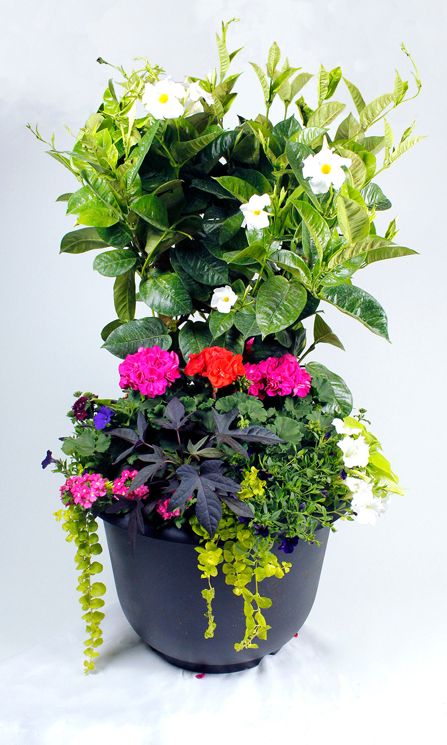 Mixed Patio Planter 21