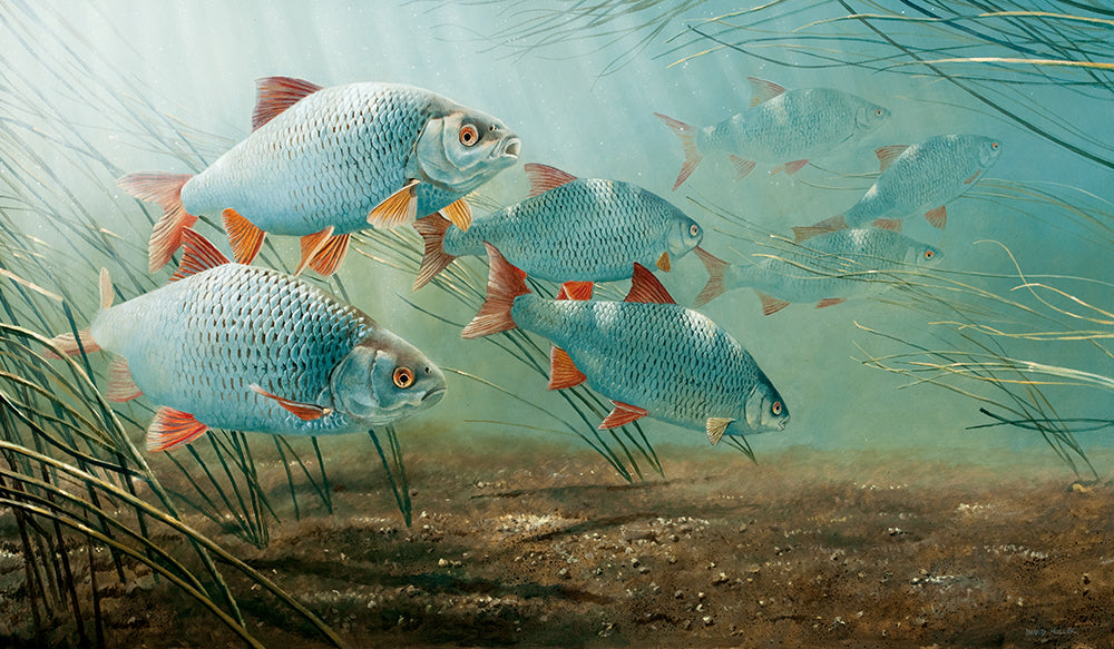 river roach painting by David Miller