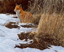 Load image into Gallery viewer, Late Winter Snow, Red Fox wildlife art print by David Miller. Vulpes vulpes.