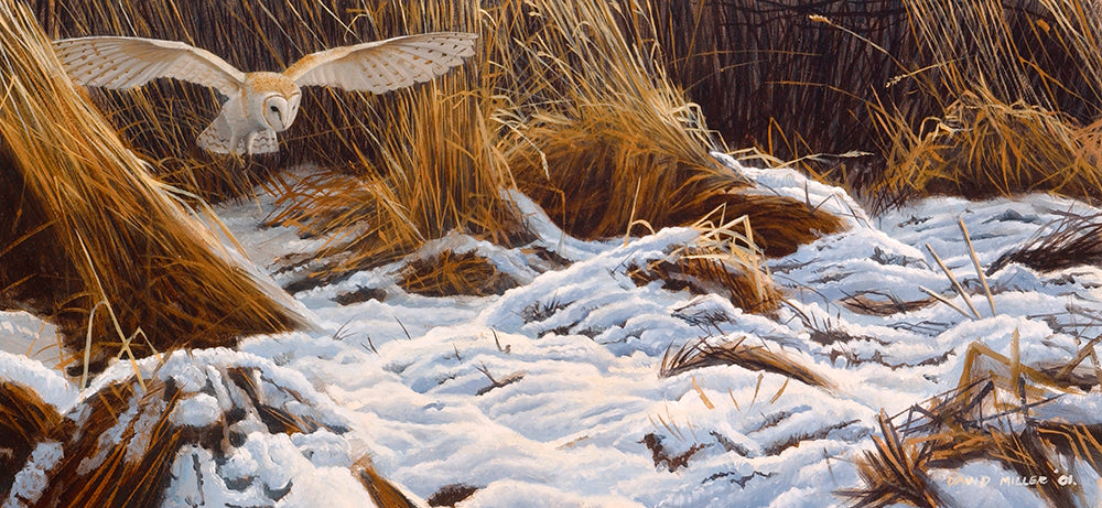 Winter Barn Owl. Bird art print of a barn owl hunting in a winter landscape by wildlife artist david miller