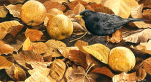 blackbird and windfalls open edition bird art print by wildlife artist david miller