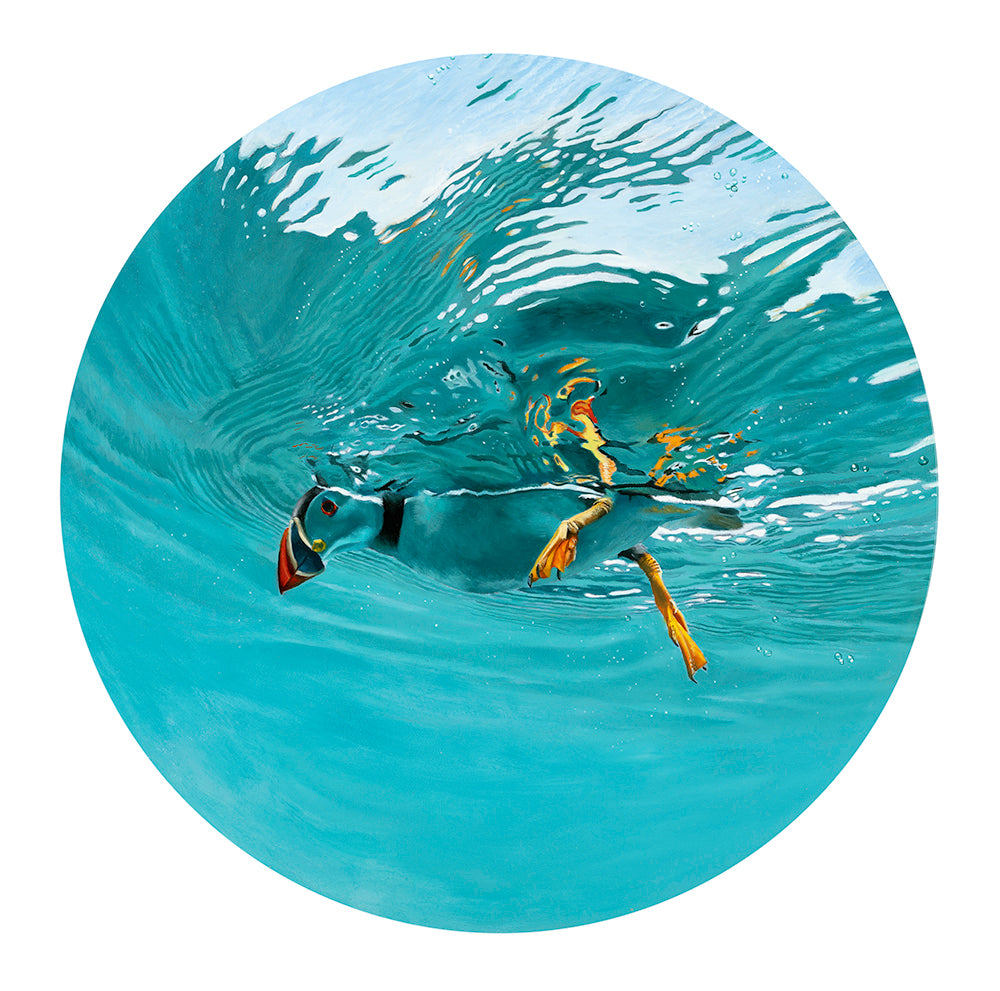 Blue Planet Series - Snorkelling Puffin