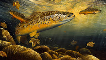Load image into Gallery viewer, Ferox Trout and Char limited edition fish art print by wildlife artist David Miller. Salmo trutta. Salvelinus alpinus.