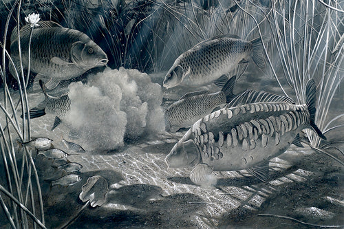 Midnight Feast black and white fish art print of carp by wildlife artist David Miller. Cyprinus carpio.